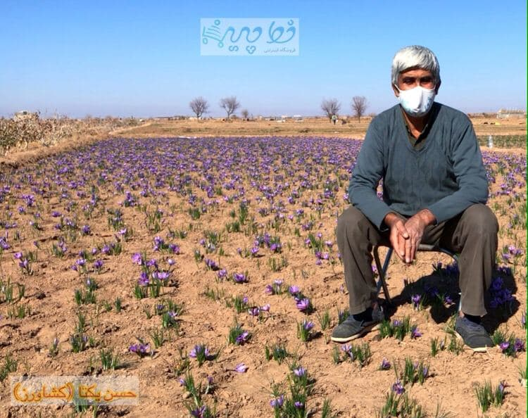 آقای حسن یکتا کشاورز با تجربه ی سرایانی برامون از زعفرون میگه !